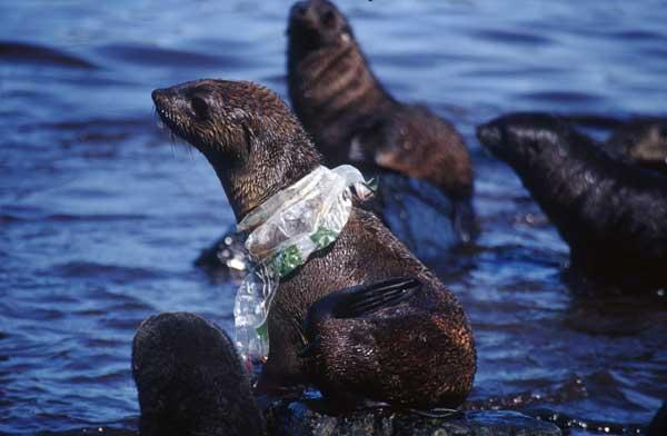 how does plastic waste affect marine life